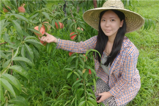'오시즌' 박경미 대표가 생산하고 있는 복숭아의 작황을 살펴보고 있다