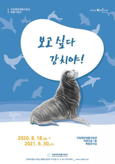 국립해양생물자원관의 특별 기획전 '보고싶다 강치야 !' 포스터
