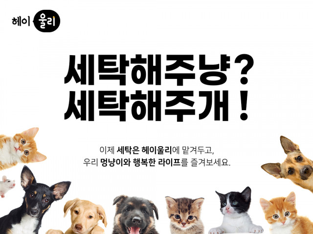 반려동물 보호자를 위한 비대면 세탁서비스 '헤이울리'가 투자형(증권형) 크라우드펀딩을 준비한다