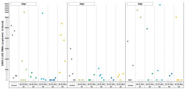 Graph 1: CP-COV03's SARS-CoV2 in-vivo efficacy study results