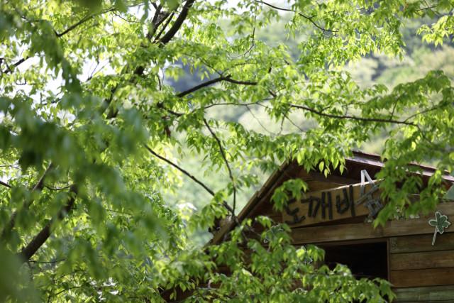 광릉숲길 어린이정원에서 만날 수 있는 도깨비숲