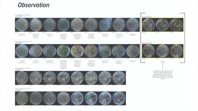 '디지털+미디어' 디자인 연구팀이 제안한 '토양 속 균사체를 통해 배우는 이상적 토질 환경' 디자인 프로젝트